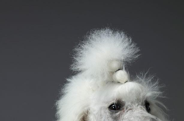 Dog funny hair