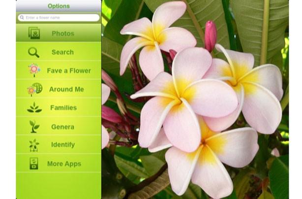 Flowerpedia