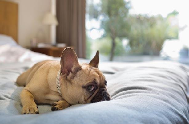 Dog sleeping on a bed