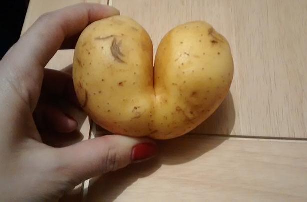 Vegetable sex porn