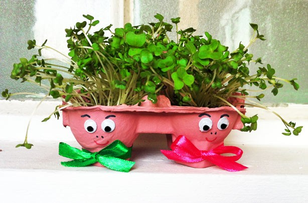 Egg-box cress heads craft