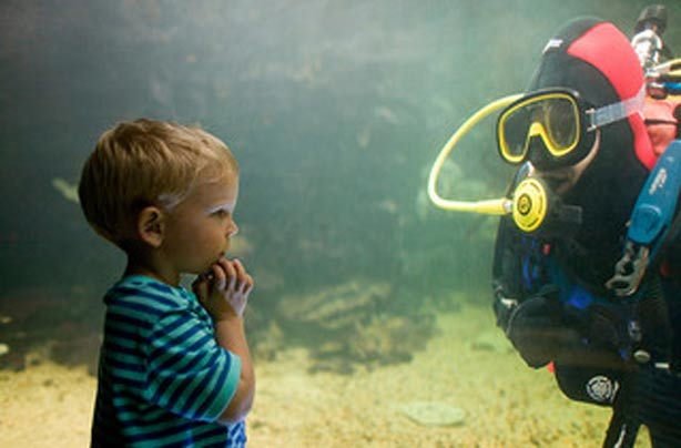 Days out: Anglesey Sea Zoo - goodtoknow