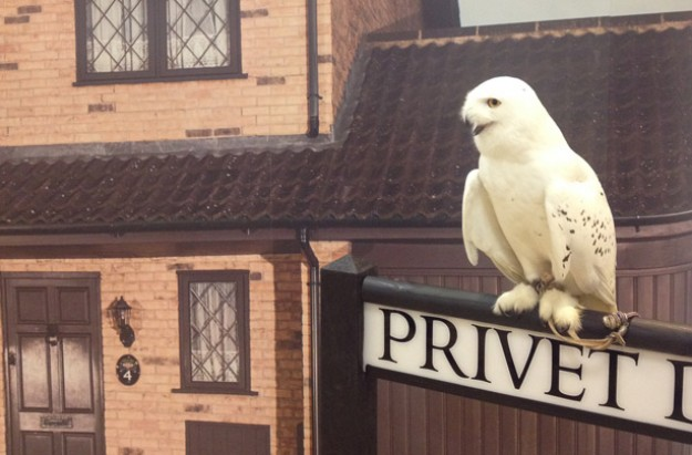 Hedwig: Feathers and Flight at Warner Bros. Studio Tour