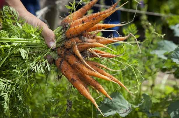 42 jobs to do from home grow sell vegetables