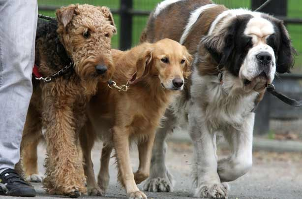 42 jobs to do from home dog walker