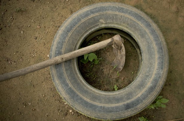 Money-saving gardening tips: Car tyre garden