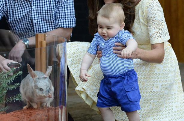 Prince George looking at a bilby