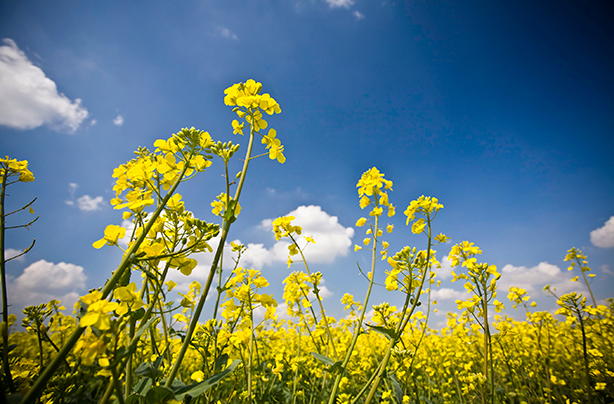 Most of Britain is still suffering, but what about natural hay fever remedies?