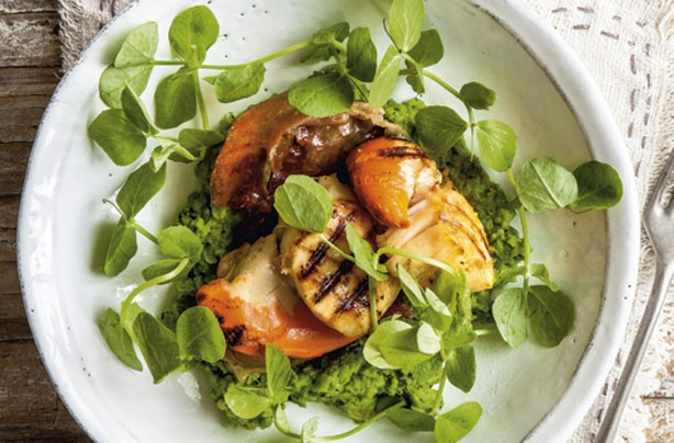 Seared scallops with pea puree