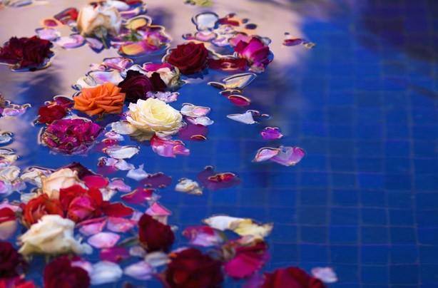 Petals in water