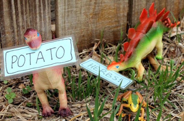 Dinosaur plant markers