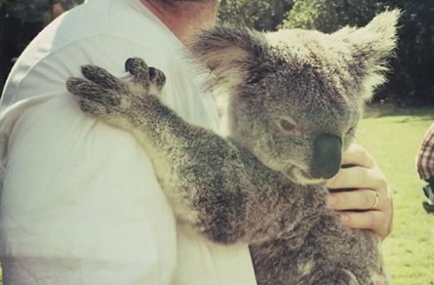 Justin Timberlake koala