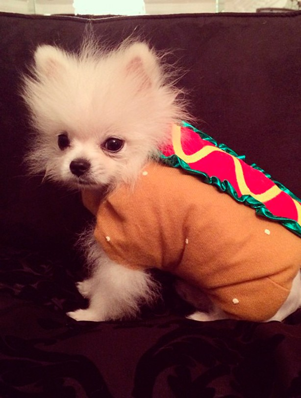 Hotdog dog Paris Hilton