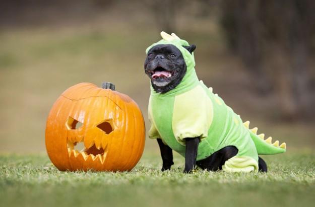 Pug-o-ween