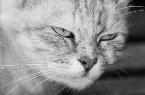 evil cat