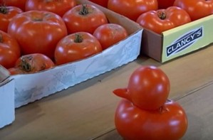 Tomato that looks like a duck