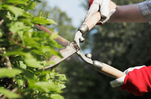 ways to make money cutting hedges