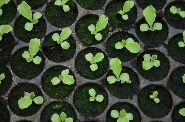 ways to make money seedlings