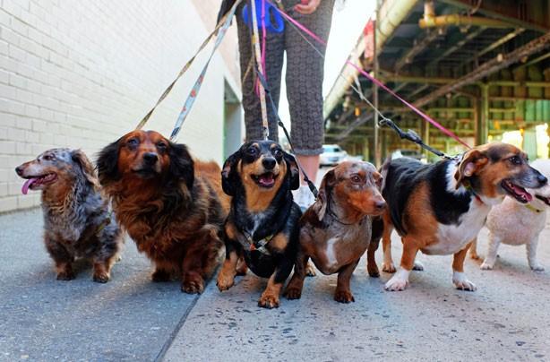 ways to make money dog walking