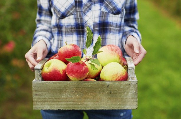 Apples, fruit, how to get rid of cellulite