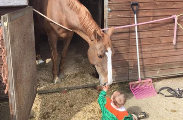 Katie Price Bunny horse manure