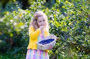 Fruit picking UK